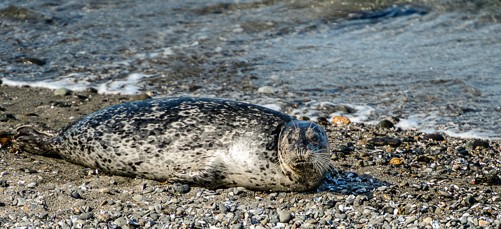 seal harbor chat The privo safe harbor seal indicates outfit7 has established coppa-compliant privacy practices to protect your child's personal information our apps do not allow younger children to share their information.
